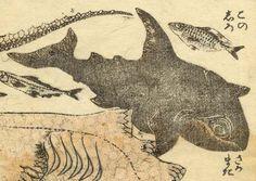 太田記念美術館(@ukiyoeota)さん 北斎はシャチも描いています。「さかまた」と右下に書いてありますが、逆叉、すなわちシャチの別名です。実物をじっくり観察する機会がなかったのか、眼がかなり大きく描かれています