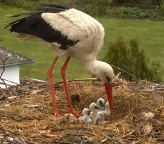 storks ... /// so who brings THEIR babies? :-/ (i love storks)