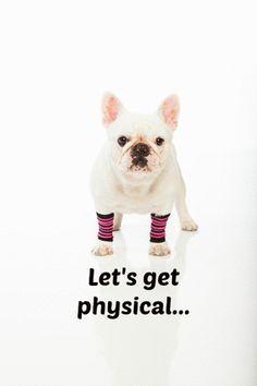 Peanut French Bulldog Jessica Smith TV Workout Videos Cardio Workouts for Women | Jessica Smith TV Fitness YouTube Workout Videos