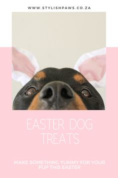 Yummy homemade dog treats #dogtreats #treats #easter #eastertreats #dogtreats #recipeoftheday #recipes #dogs #dogsstuff Carob Chocolate, Giant Chocolate, Homemade Dog Treats, Pet Treats, Dog Bakery, Online Pet Store, Dog Biscuits, Dog Treat Recipes