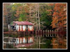 Taken during the fall off of Lakeshore Drive in Shreveport