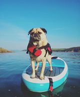 Pug | Dog | SUP | supper | Red Paddle Co