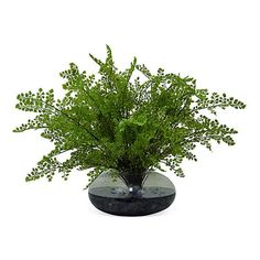 "24"" Maiden Hair Fern in Vase, Faux ($299) ❤ liked on Polyvore featuring home, home decor, floral decor and handmade home decor"