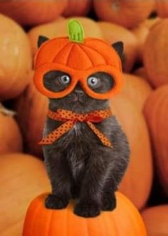 "* * "" I hate candy & Halloweenz, and now I hate  yoo! """