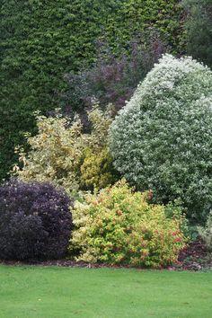 kombinácia rastlín v záhrade