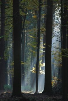 """""""If you go to a desert, you will hear this mysterious voice: Be wise, protect your forests!"""" ― Mehmet Murat ildan"""