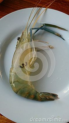 Shrimp - Download From Over 26 Million High Quality Stock Photos, Images, Vectors. Sign up for FREE today. Image: 44734507