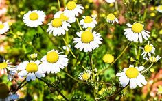 Medicinal Plants You Need To Make Natural Home Remedies Survival Life, Homestead Survival, House Plants Decor, Plant Decor, Healing Herbs, Medicinal Plants, Fruit Garden, Herb Garden, Regrow Vegetables