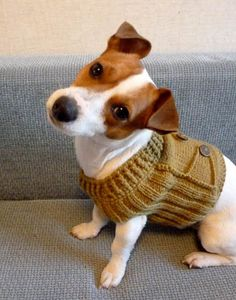Jack Russell Dogs on Pinterest Jack Russells, The Duchess and Jack Russell ...
