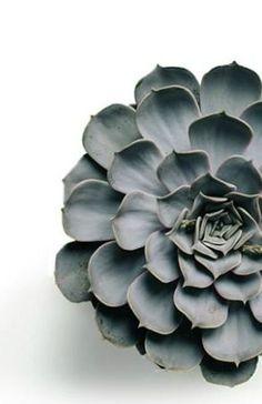 3 Indoor Plants for Non-Gardeners succulent Cacti And Succulents, Planting Succulents, Garden Plants, Indoor Plants, House Plants, Planting Flowers, Sempervivum, Cactus Plante, Plants Are Friends