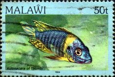 Malawi 1984 Fishes SG 698 Fine Used SG 698 Scott 437 Imprint 1984 Condition Fine Used Only one post charge applied on multipul purchases Details N B