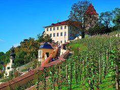 Wenceslas vineyard at the Prague castle, Prague, Czechia Prague Castle, Historical Monuments, Towers, Czech Republic, Castles, Places Ive Been, Countries, Vineyard, Wanderlust