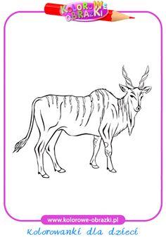 Antylopa Eland - Kolorowanki zwierzęta