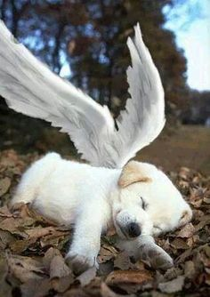 In loving memory of all my fur-angels. I can't wait to see you all on the other side. What a happy day that will be!!!