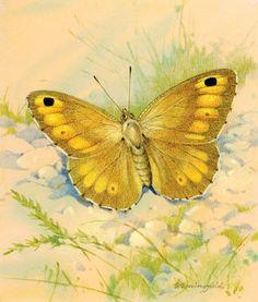 Смотреть бесплатно дораму Морской призрак (Ocean Butterfly: Phii