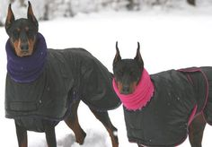 two dobermans in snow jackets - Blue Willow Dog Coats - had to SEARCH for this! www.bwdogcoats.com