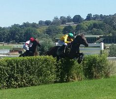 King Triton (left) and Bold Zamour in the Thomas Foods International Steeplechase at Oakbank Sunday 13 March 2016 (Image credit: Craig McIntosh)