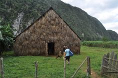 Valle de Viñales! Amazing landscapes that can be seen during our travel-study course in Cuba.