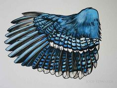 Blue Jay Wing Study - Graphic style by Jody Edwards