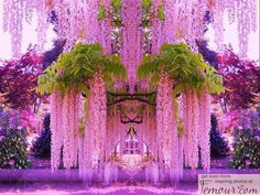 Funny pictures about A purple wisteria flower garden in Japan. Oh, and cool pics about A purple wisteria flower garden in Japan. Also, A purple wisteria flower garden in Japan. Wisteria Japan, Wisteria Garden, Purple Wisteria, Flowers Garden, Wisteria Tree, Wisteria Tunnel, Chinese Wisteria, Garden Plants, Pink Garden