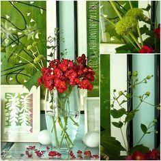 le monde de kitchi: Friday - Flowerday # 32