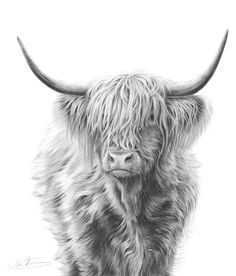 Farm Animals – Nolon Stacey – Highland Cow – … - Top Of The World Highland Cow Art, Highland Cattle, Highland Cow Tattoo, Highland Cow Painting, Cross Paintings, Animal Paintings, Animal Drawings, Drawing Animals, Cow Drawing