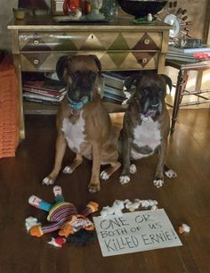 Funny Dogs - One or both of us killed Ernie