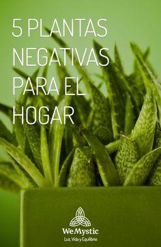 Bonsái, cactus (mejor en el trabajo), enredadera, bugambilia y pino