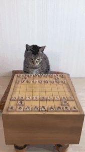 「猫 将棋 gif」の画像検索結果