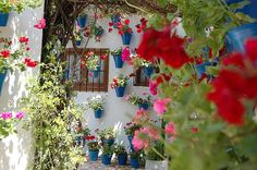 La ciudad española de Córdoba  es famosa por sus patios y desde los años treinta los celebra con un concurso y visita turística que hacen qu...