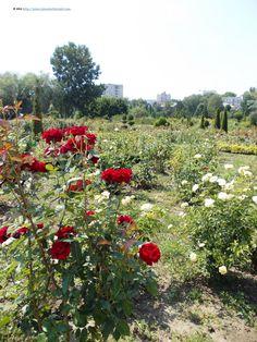 At Dendarium, a huge Botanical Park