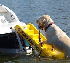 Description What Our Top Dog Says About The Paws Aboard Dog Boat Ladder: The Paws Aboard Dog Boat Ladder is a convenient tool that allows your dog to exit easily and return to the boat while on the wa                                                                                                                                                      More