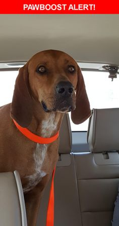 Is this your lost pet? Found in El Paso, TX 79938. Please spread the word so we can find the owner!  BROWN HOUND. VERY FRIENDLY.  Near Tierra Limon Dr & Tierra Sauz Dr