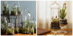 Fun project to start growing plants in an apothecary jar. Feel free to share your growings on our google+ page: http://google.com/+Buyapothecaryjars1