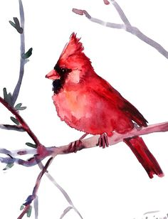 Male Cardinal oriiginal watercolor painting 10 X 8 by ORIGINALONLY, $24.00