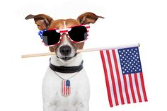 july-4th-patriotic-mutt.jpg (600×400)