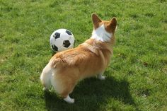 Just TRY to take my ball!