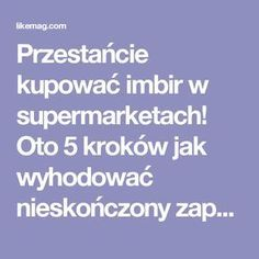 Przestańcie kupować imbir w supermarketach! Oto 5 kroków jak wyhodować nieskończony zapas w domu | LikeMag | We Like You Health Diet, Health And Beauty, Natural Remedies, Life Hacks, Good Food, Food And Drink, Diy Projects, Drinks, Healthy