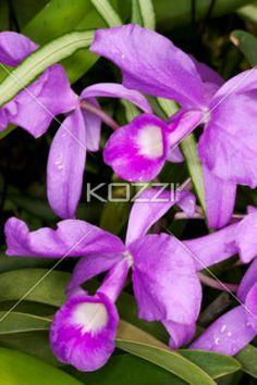 close-up of purple flowers. - Close-up shot of purple flowers.