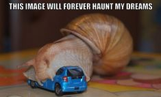 The Best Funny Pictures Of Today's Internet  RuinMyWeek.com #funny #pictures #photos #pics #comedy #humor #hilarious #weird #odd #random