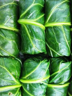 Stuffed Collards ~ 16collard leaves or halves, a little bigger than hand size ~ 1 1/2 cups cooked white rice ~ 1/2 pound ground pork ~ 1/2 cup diced onion ~ 1/2 cup diced celery ~ 1/2 cup diced green bell pepper ~ 2 teaspoons of your favorite creole seasoning ~ 1egg, lightly beaten ~ 1/4 cup chicken broth