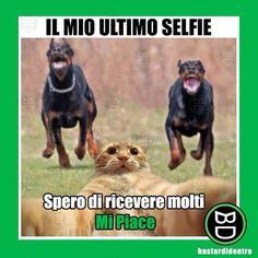 """Clicca anche tu """"mi piace"""" per questo povero gatto! #bastardidentro #selfie #gatto #ipnoticamentebastardidentro www.bastardidentro.it"""