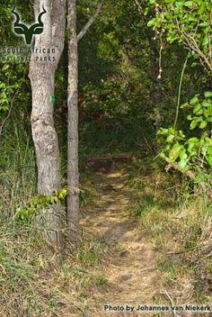 KNP - Mopani - Camp Trail