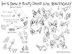 How to Draw Canine Ears Tutorial #1 by kenket on DeviantArt