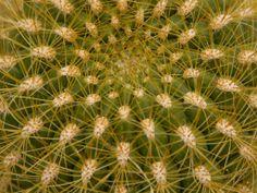 Kaktus Wallpaper Gratis, Terrier, Nature, Plants, Garden Parties, Cactus, Naturaleza, Terriers, Plant