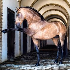 Andalusian horse, Horses and Equine photography.