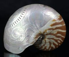 Rare Antique Carved Nautilus Shell Love Token Early 19th c.
