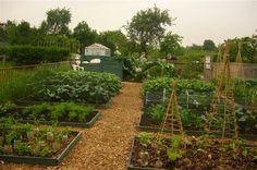 more potager love #garden #edible_gardening #potager