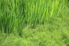https://flic.kr/p/83nHaw   Green / 緑(みどり)   Genbi-kei(gorge), Ichinoseki-shi(city) Iwate-ken(Prefecture), Japan  岩手県一関市(いわてけん いちのせきし) 厳美渓(げんびけい)