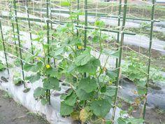 Fruit, Plants, Flora, Plant